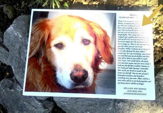 memorial-photo-dog